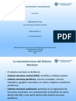 neuroanatomiayneurobiologiatrabajon2-121117212110-phpapp02