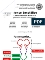 troncoenceflico-120809132414-phpapp01_2