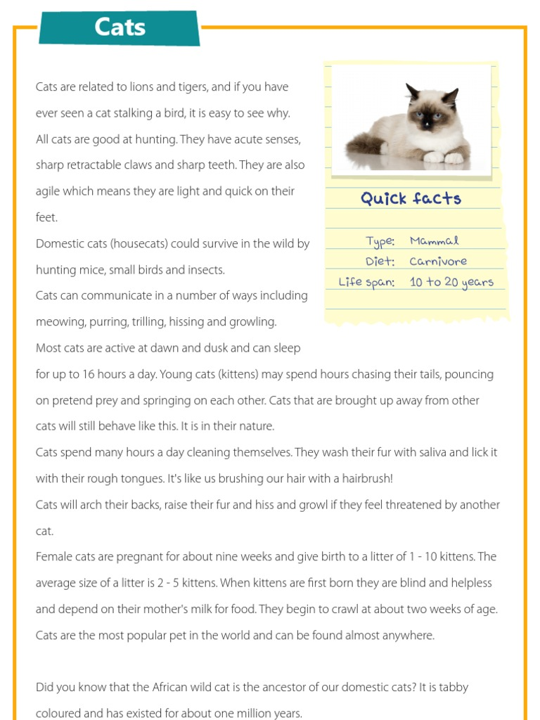 Worksheet Comprehensions For Kids cats reading comprehension for kids kitten kids
