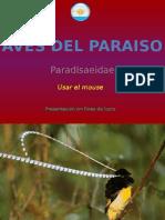 Aves de Paraiso