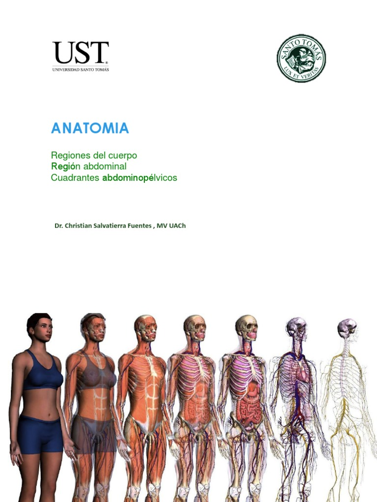 Regiones Anatomicas Abdomen