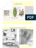 cloroplastos[1]