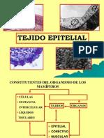06 Tejido Epitelial b