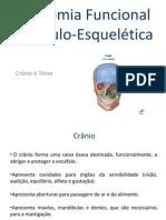 Ossos - Cranio e Torax (1)