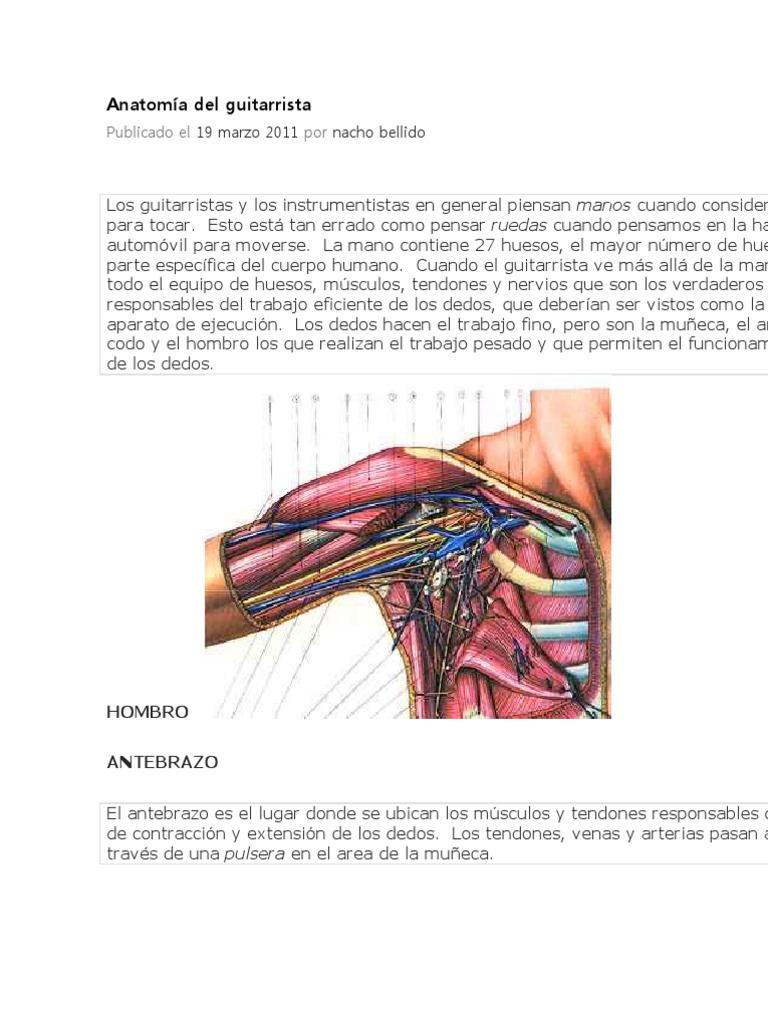 Anatomía del guitarrista