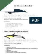 delfines clases