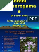 Sinta Mayasari
