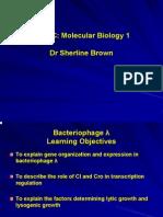 Bacteriophage Lambda
