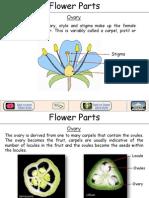 Flower Ovary