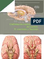Cerebelo Microanatomia I