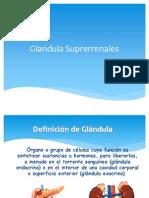 glndulas-suprarrenales-1216252459258305-9