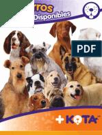 Raz as de Perros