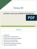 Tema XI ADN ARN [Autoguardado]