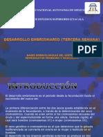 Unidad 4 Bases Embriologicas