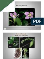 Morfologia Flor