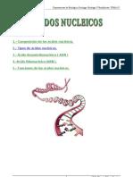 Tema8 Ácidos Nucleicos