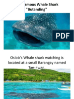 The Famous Whale Shark Report