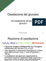 Glucose_Oxidation