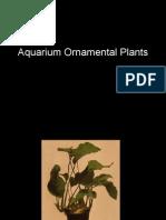 Aquarium Ornamental