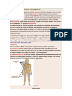 Anatomia y Fisiologia Del Sistema Oseo