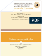 Anatomía Humana I (parte 2)