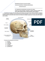Anatomía de la cabeza