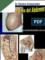 Anatomia Abdomen