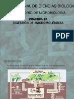 Digestion de Macromoleculas (Eq. 2,5)