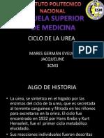 CICLO DE LA UREA.ppt