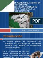Prácticas de manejo del lechón en maternidad