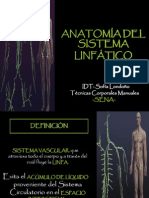 anatomadelsistemalinftico-120619065920-phpapp02