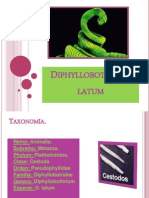 taxonómia diphildobothriasis)