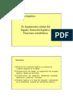 Higado_Generalidades