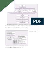 pathophy of diabetic neuropathy