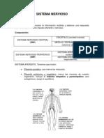 Copia de Sistema Nervioso Alonso