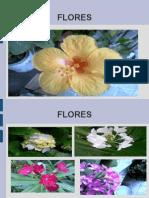 Flores Bigleo