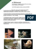 Introdução ao estudo do Filo Mollusca
