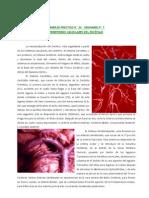 Territorios vasculares del encéfalo. Leo D'Alfonso
