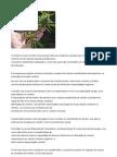 Cannabinoides da maconha diminui a degradação e o evelhecimento cerebral, e reverte demencia