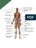 Aparatos o Sistemas Del Cuerpo Humano222