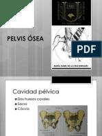 Pelvis Osea. Equipo 4