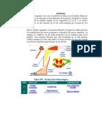 REFLEJO ROTULIANO -> Futura Médica