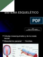 SISTEMA ESQUELETICO -> Futura Médica