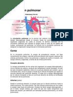 circulacion-pulmonar