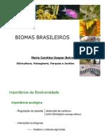 biomasdobrasil-101102184149-phpapp02