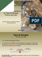 apresentaofinal-tigredebengala-120430173701-phpapp01