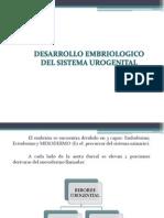 desarrollo-embriologico-urogenital.ppt