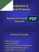 Protozoa A