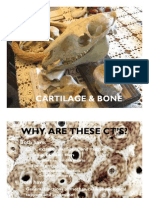 Cart Bone 2008