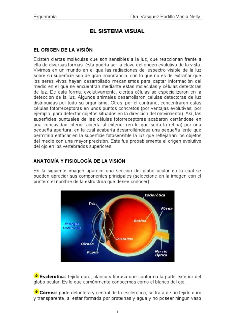 C_6_visual